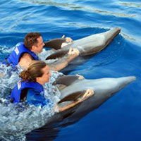 riding-dolphins